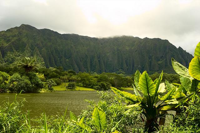 Things to do in Oahu: Hoomaluhia Botanical Gardens! Hawaii