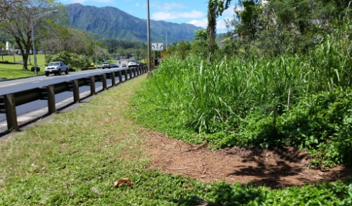 Puu Maelieli Trail: How to get to this Kaneohe hike, Oahu Hawaii hiking trail