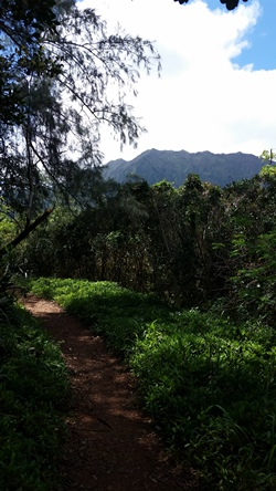 Puu Maelieli Trail: Scenes from Kaneohe hike, Oahu Hawaii hiking trail