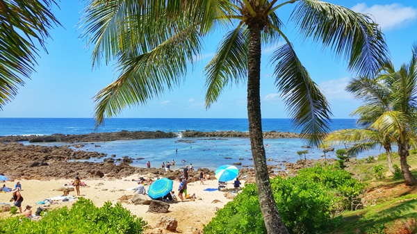 Oahu beaches: Shark's Cove for North Shore snorkeling, Hawaii