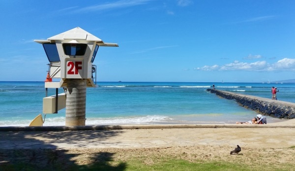Waikiki Snorkeling: For the best beach in Waikiki for snorkeling, look for the lifeguard station 2F and the Waikiki Wall