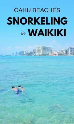 Waikiki Snorkeling: Best beach to snorkel in Waikiki, Oahu, Hawaii