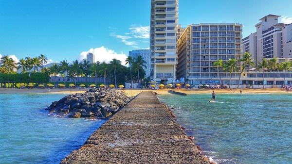 Where to see turtles in Oahu: Turtles swimming in Waikiki along pier at Outrigger Reef Hotel near Sheraton Waikiki, Hilton Hawaiian Village, Hawaii