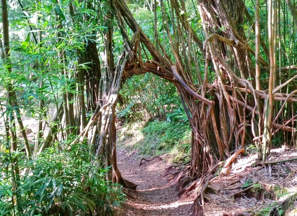 Waterfall hikes in Oahu: Manoa Falls Trail, Hawaii