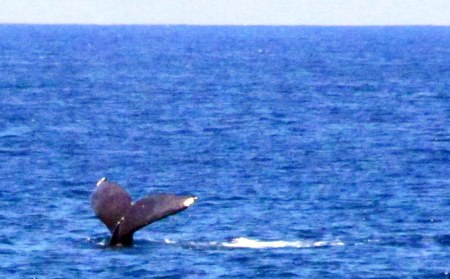 Whale watching Oahu: Whale sighting!