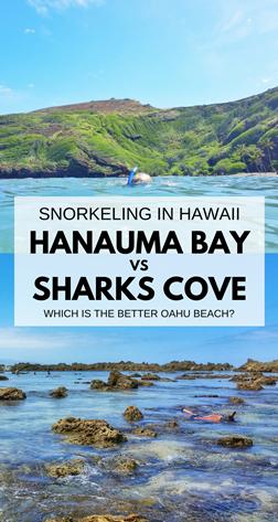 Hanauma bay sharks