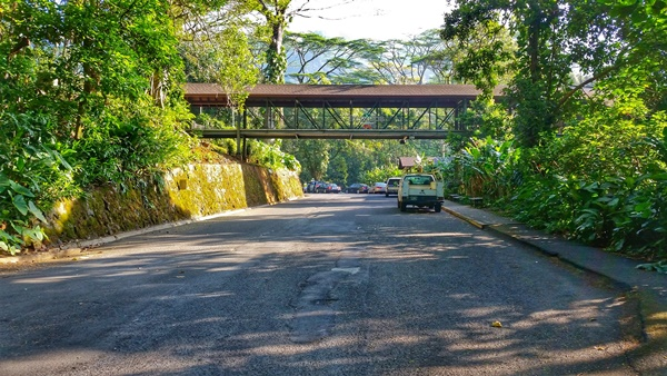 How to get to Manoa Falls by bus: Directions towards trail parking, Oahu, Hawaii