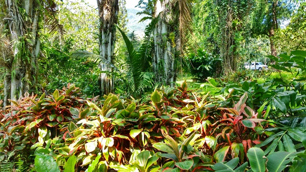 How to get to Manoa Falls by bus: Near Lyon Arboretum, Oahu, Hawaii