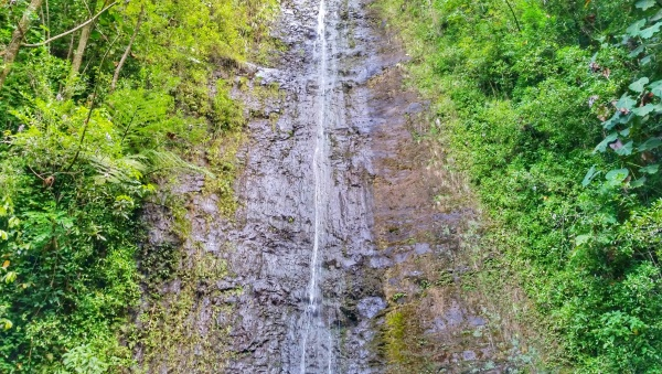 How to get to Manoa Falls by bus: Waterfalls on Manoa Falls Trail