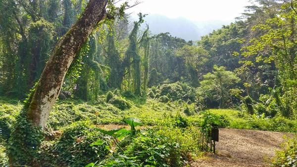 Manoa Falls Trail: Forest hike in Oahu, Hawaii
