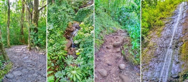 Manoa Falls Trail: Jungle hike, forest hike, waterfall hike in Oahu, Hawaii!
