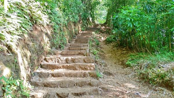 Manoa Falls Trails: Stairs on hiking trail, Oahu, Hawaii