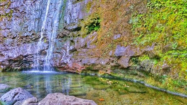 Manoa Falls Trail: Waterfall hike and waterfalls in Oahu, Hawaii
