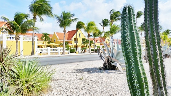 Shore excursions in Aruba cruise port. What to wear on cruise excursions: Best travel bags, backpacks, and travel shoes/sandals for port day. Stay cool in hot weather excursions. Caribbean cruise.