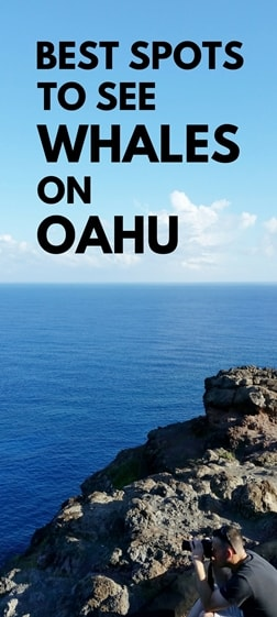 Best whale watching spots, Oahu tours. Whale season, Hawaii