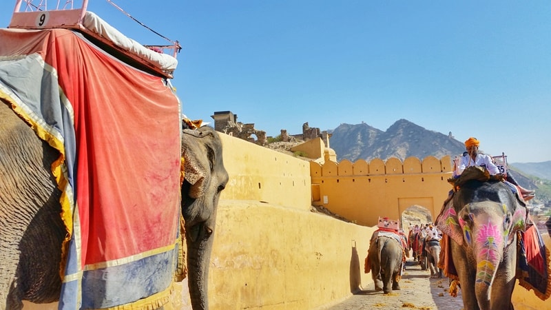 Forts in Jaipur in one day: Amber Fort elephant ride. Rajasthan forts, India