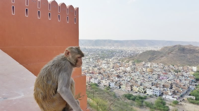 Jaipur itinerary, 3 days: Sun Temple with monkey. Hilltop temple with best views of Jaipur. Best places to visit in Jaipur, Rajasthan, India.