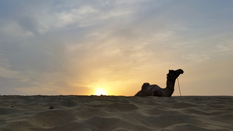 Jaisalmer itinerary, 4 days: Overnight camel safari in Jaisalmer desert tour, Rajasthan. Sunrise camel ride in sand dunes. Best places to visit in Jaisalmer, India