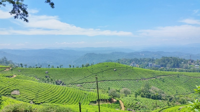 Munnar itinerary: Best places to visit in Munnar in 3 days. Kerala, India
